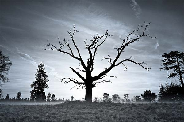 Dead Tree Photography