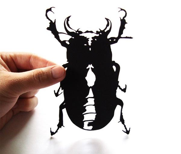 Paper-cut Beetle