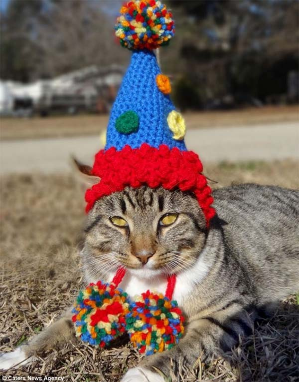 Cats in Hats by Meredith Yarborough