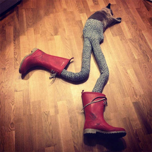 Cats Wearing Tights