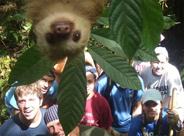 Sloth Photobomb
