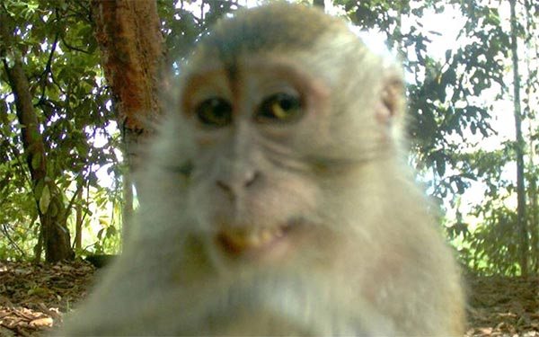 Smiling Monkey Captured on Hidden Camera