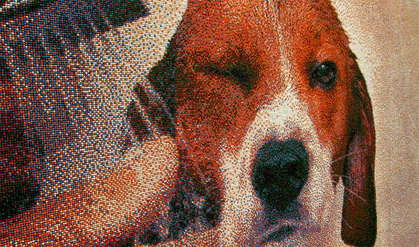 Beagle Portrait Made From 221,184 Sprinkles