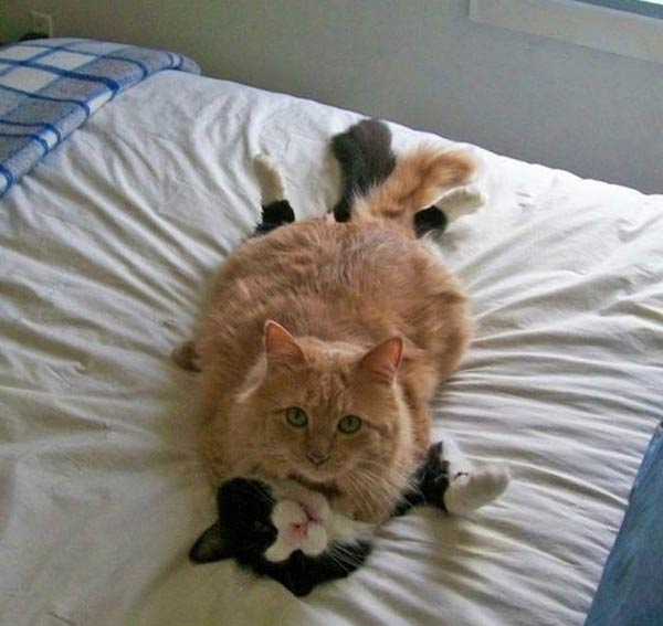 Cats Caught In The Act
