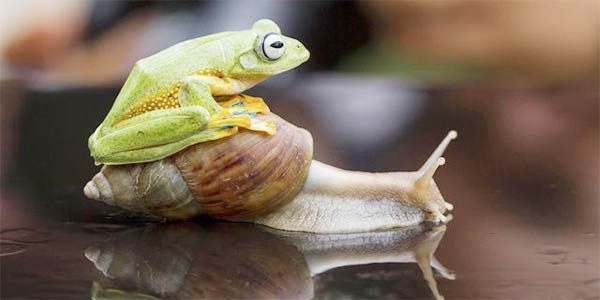 Frog Riding Snail