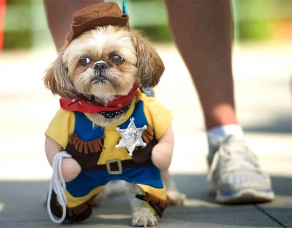 Dog Dressed Up As Sheriff