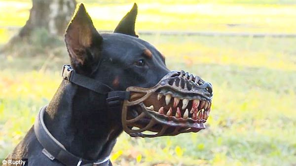 Terrifying Muzzle Can Transform Your Dog Into Warewolf