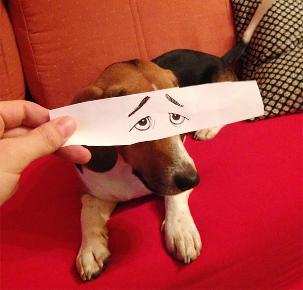 Funny Eye Illustrations For Juno, The Dog