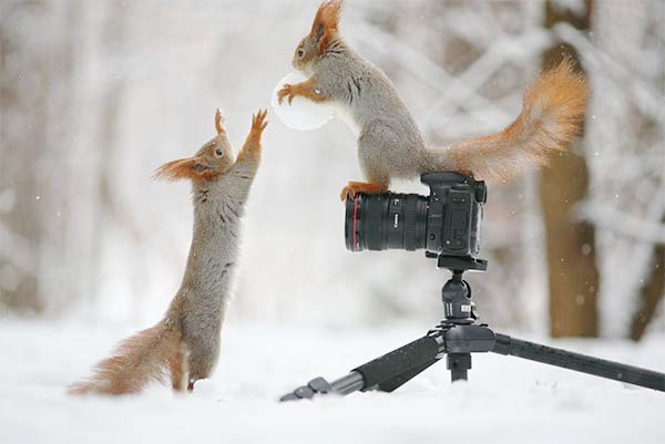 Funny Squirrels Photography