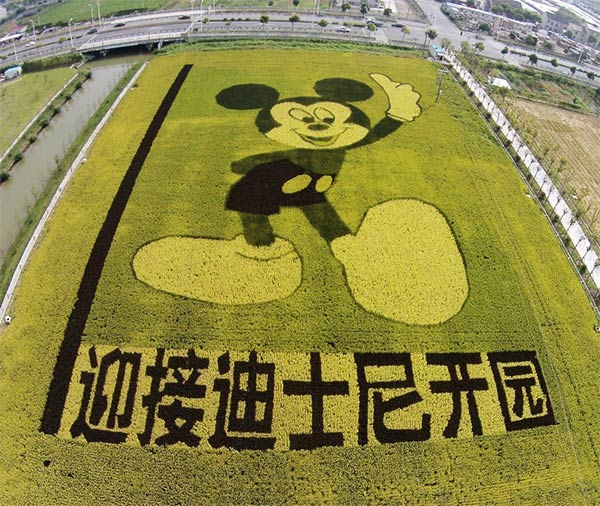 Mickey Mouse Shape Made of Rice Plants in China