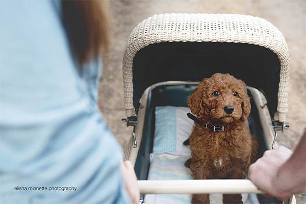 Couple Hilariously Recreates Newborn Photo Shoot with Their Puppy