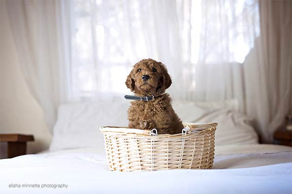 Couple Takes Newborn Photos With Their Dog