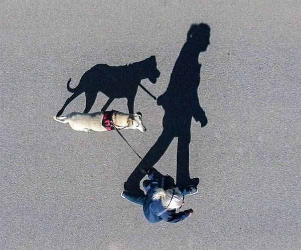 Dog & Woman Shadow