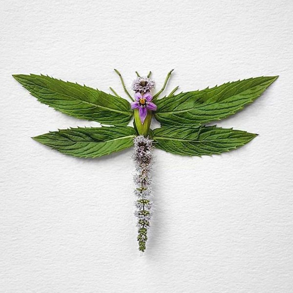 A series of Insects made of Flowers