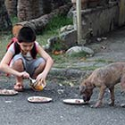 Young Boy Feeds Starving Stray Dogs in His Spare Time