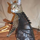 Beautiful Battle Armor For Cats