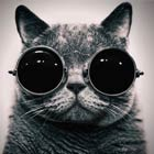 10 Cute Cats Wearing Hipster Glasses