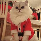 Cat Wearing Baby-Sized Santa Outfit