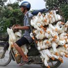 I have gathered 10 beautiful photos of extreme transportation captured by photographers from all over the world. Dinuka Liyanawatte/Reuters A man transported lanterns on his motorbike ahead of Vesak...