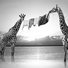 Dreamlike Scenes of African Animals