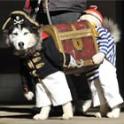 """That's it. The search is over. I have found the best dog costume of all time."" But is it? @TheMichaelMoran thinks so, and shared this picture to prove it."