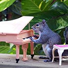 The two grey squirrels are lured by placing peanuts and peanut butter among toys in garden and then retired postwoman Kathy Pryun captures funny photos in various scenes like...