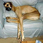 Funny Photos of Tired Animals