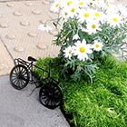 Potholes Turned into Miniature Flowerbeds in London