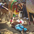 Hindu devotees lie on the ground in front of running cows as part of a ritual during the Govardhan Puja festival in Dhar, India. Hindus believe that Lord Krishna lifted Govardhan Mountain on this day […]