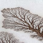 Rivers Forming Treelike Figures