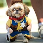 Little Dog Dressed Up As Sheriff