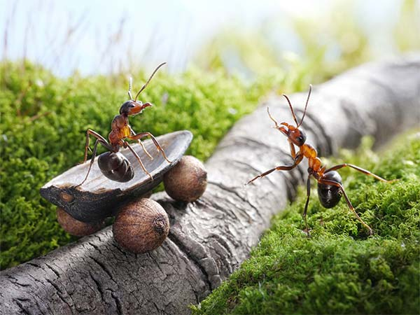 Macro Photography of Ants