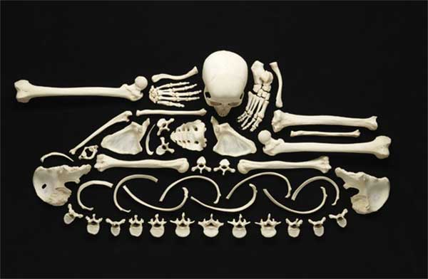 Art made with human bones
