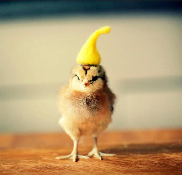 Cutest Baby Chicks in Hats by Julie Persons