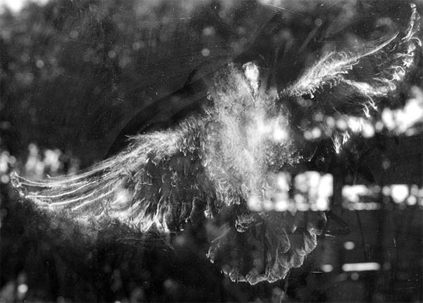 Ghostly Bird Impressions on Glass