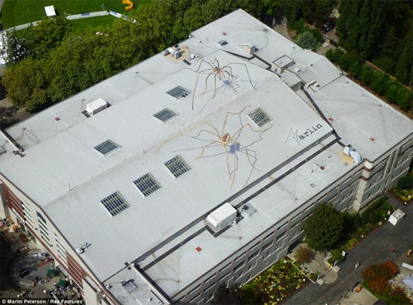 Spiders Painting on Buildings