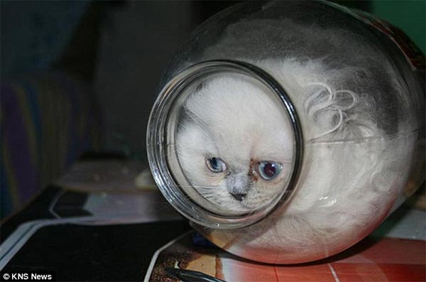 Kitten loves hiding in empty jars