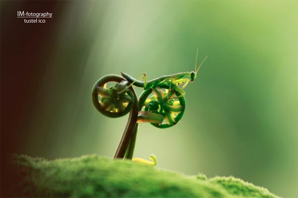 Praying Mantis Riding a Bike