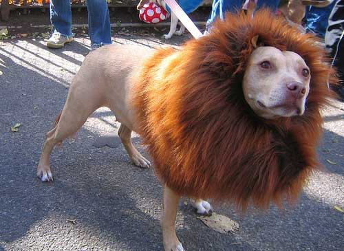 Crazy Pet Halloween Costumes