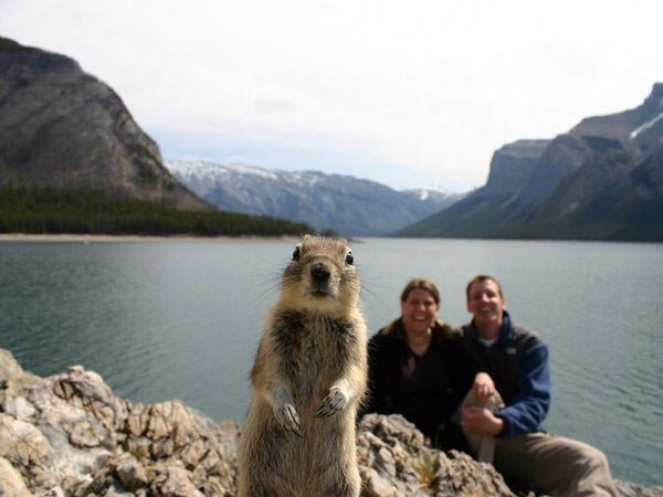 Squirrel Portrait Photobomb