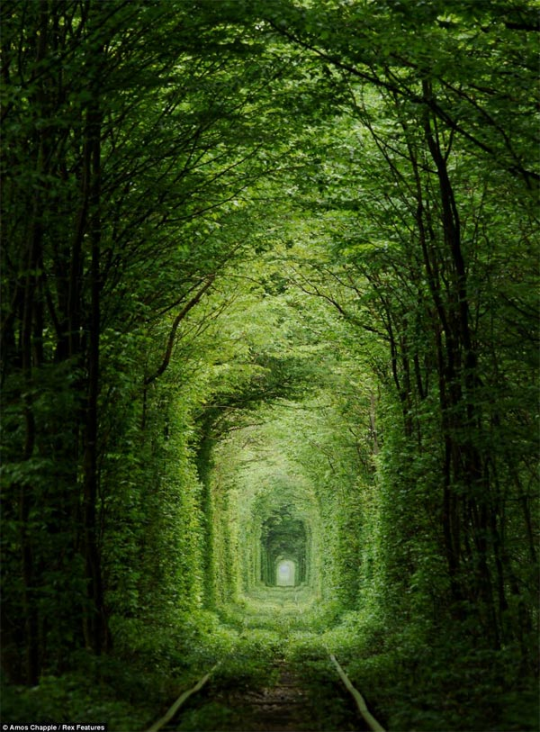 Beautiful view of Tunnel of Love