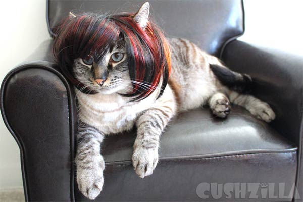 Wigs & Costumes For Pets