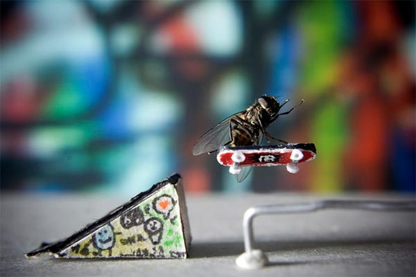 Adventure of Mr. Fly