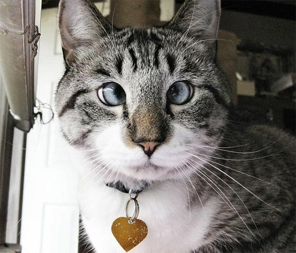 Spangles - The Cross-Eyed Cat