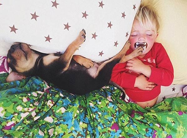 Toddler Napping with His Puppy