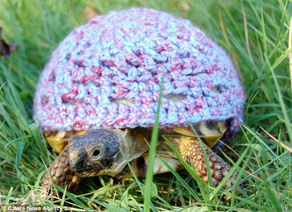 Woolen Outfits For Tortoise