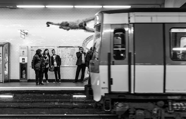 Amusing Photos Show What It Would Be Like If Animals Took The Paris Metro
