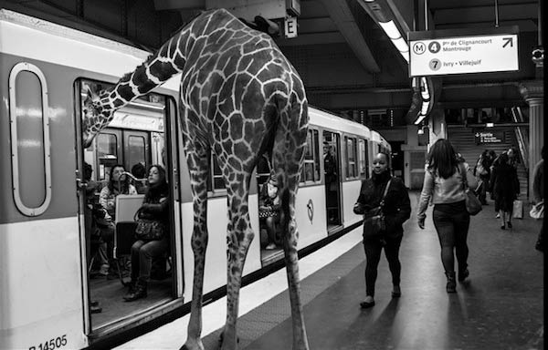 Savanna Animals Took Paris Metro