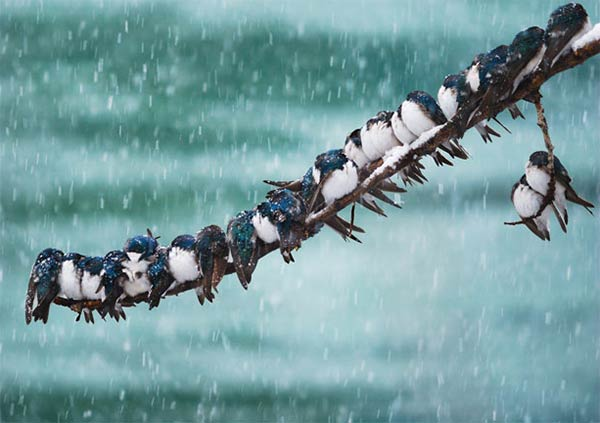 Birds Huddling Together