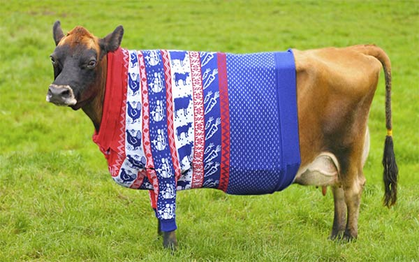 Fashion-Conscious Cow